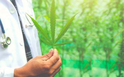 La Ley 42 autoriza el uso del cannabis para propósitos medicinales